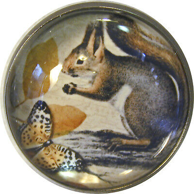 "1"" Crystal Dome Button Squirrel & Butterfly"