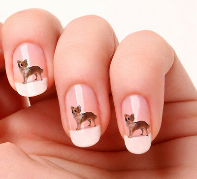 20 Nail Art Stickers Transfers Decals #396 - Chihuahua Just peel & stick