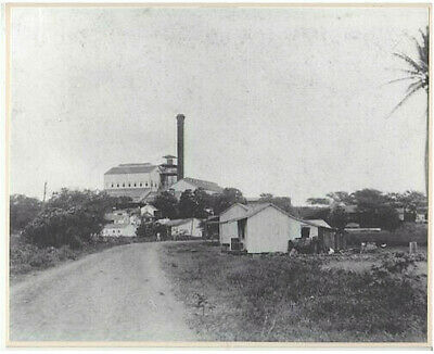 Rare Waipahu Road And Mill 1930's? Hand Printed Silver Halide 8X10 Photograph