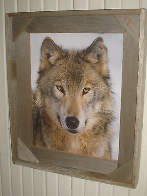 Rustic 16X20 Print Wolf Barnwood Framed With Glass