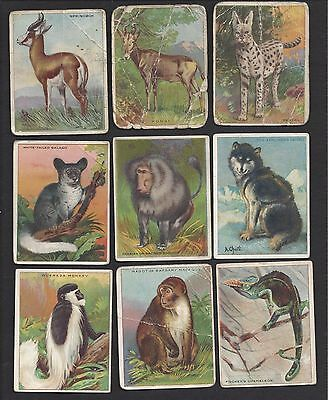 1909 T29 Animal Series Lot Of 44 Different Cards  Poor To Vg+    Nslt04