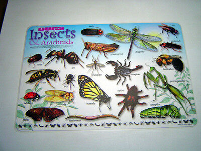 Bugs & Insects  Activity Placemat