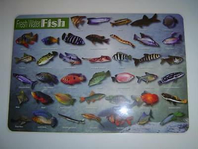 Fish - Fresh Water Fish Activity Placemat