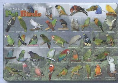 Pet Birds Educational Activity Placemat
