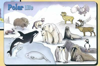 Polar Life Activity Placemat