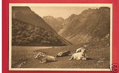 CPA Yvon postcard LA DOUCE FRANCE cows animal vaches LAC D'ESTAING Val d'Azun R