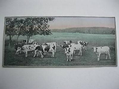 """VINTAGE 1920's SMALL  8"""" by 3 5/8"""" COWS CATTLE CALENDAR SAMPLE PRINT LITHO #48"""