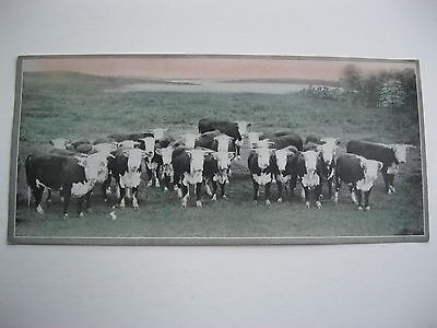 """VINTAGE 1920's SMALL  8"""" by 3 5/8"""" COWS CATTLE CALENDAR SAMPLE PRINT LITHO #49"""