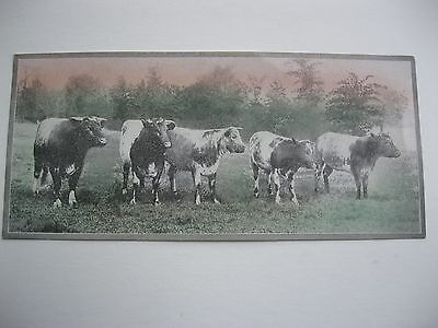 """VINTAGE 1920's SMALL  8"""" by 3 5/8"""" COWS CATTLE CALENDAR SAMPLE PRINT LITHO #52"""