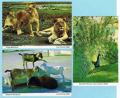 (3) Unused Scalloped Edge Color Photo Postcards - Lion Country Safari Zoo