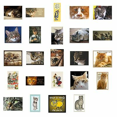 Tabby Cat Magnet Grey Brown Red Kittens Sleepy Mad Choose Favorite Cat Picture