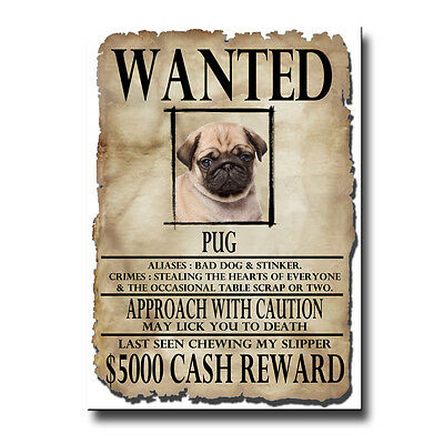 PUG Wanted Poster FRIDGE MAGNET No 3 PUPPY New DOG Fawn FUNNY