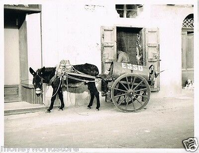 REAL PHOTO VINTAGE 1950's *THE ESSO DONKEY,GOZO*ITALY,RODGER LEE,ESSO OIL,RARE