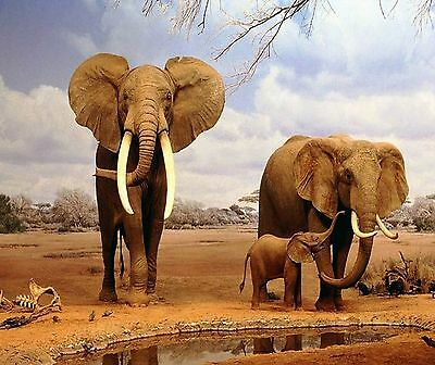 Elephant Family At The Water Hole  Image 1 Computer Mouse Pad 9 X 7