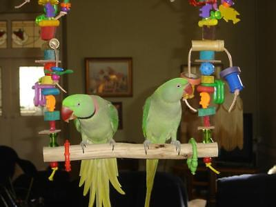 Bird Toy This Swing Can Be Made For Any Parrot<Cage >Aviary