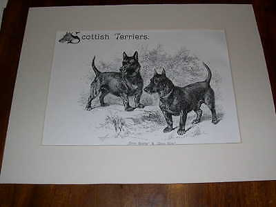 """RARE LARGE ANTIQUE SCOTTISH TERRIER DOG PRINT 1907 BY R. MOORE """"CRON SOOTIE"""""""