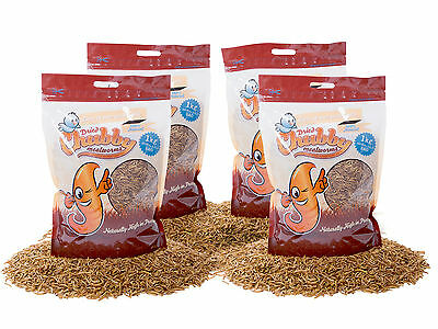 4Kg High Quality Chubby Dried Mealworms for Wild Birds etc. Best Brand in UK