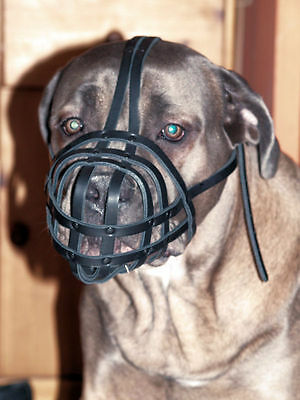 Light Leather dog muzzle Pit Bull and Other similar snouts