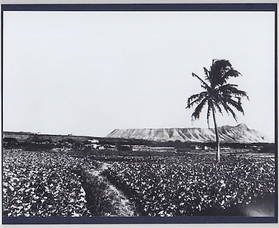 "1870's? EARLY HONOLULU FROM WEST HAND PRINTED SILVER HALIDE PHOTO ON 8X10"" MATT"