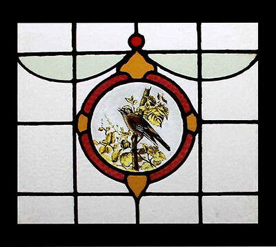 Stunning Rare Painted Song Bird Antique English Stained Glass Window