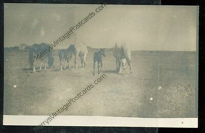 Horses in the Meadow (Pre-20) (real photo(Horse D)#44