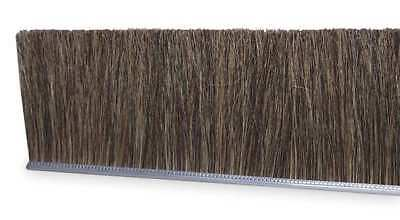 Strip Brush,36 In L,Overall Trim 2 In TANIS MB409236