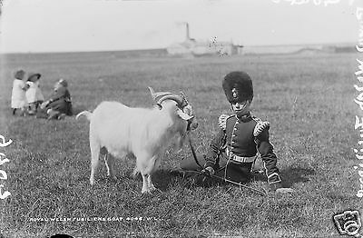 """Royal Welsh Welch Fusiliers and Goat in Cork 1887 British Army 7x5"""" Reprint"""