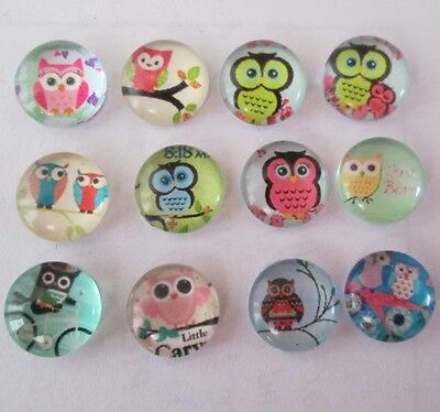 Hot! MIXED Owl 12PCS floating charm DIY for glass living memory locket #013