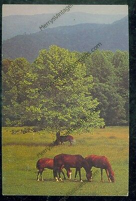 Let's Eat Where's Trixie (horse H#36)*5 unmailed postcard
