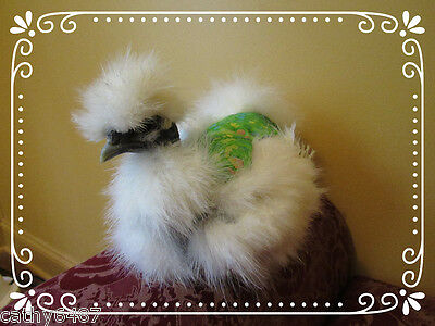 3 SILKIE CHICKEN SADDLE HEN APRON FEATHER PROTECTION HATCHING EGGS POULTRY USA