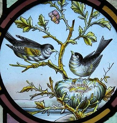 Exceptional English Victorian Painted Birds Stained Glass Window