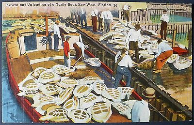 1940s Unloading Green Turtle Fishing Boat at the Key West Crawls, Florida