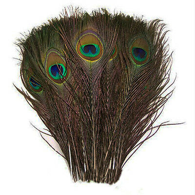 50pcs Natural Real Peacock Tail Feathers About 10-12 Inches
