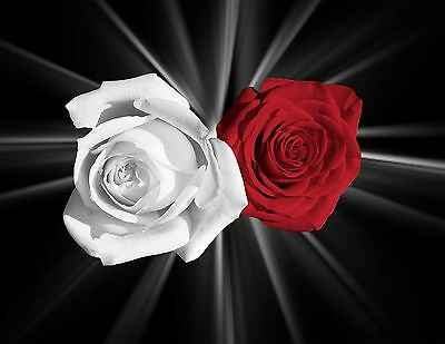 Decorative Red White Rose Flowers Home Wall Art Decor Matted Picture
