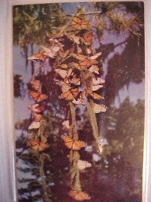 Colored Card  Monark Butterflys w/4 in Wingspan   Un Posted