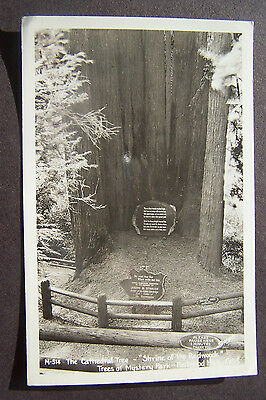 RPPC, Cathedral Tree, Trees of Mystery Park, Redwood Highway, California, V3683