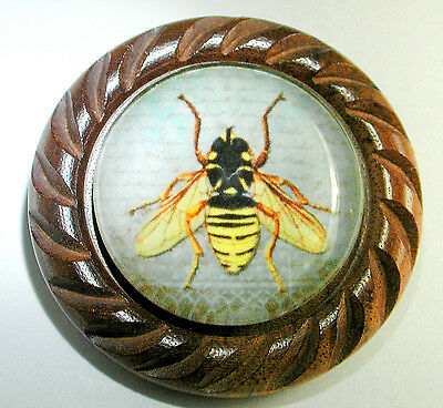 Large Glass Dome Button Set in Carved Wood  Insect Honey Bee 1 & 5/8""