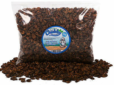 1Kg Dried Silkworm Pupae for Wild Birds Fish Koi Turtles Terrapin Food