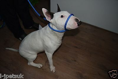 Strong Dog Training Tool Head Collar Halter Lead 1 Size Fits All  Champion