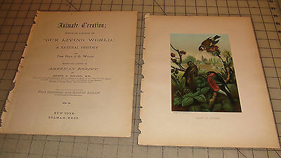 "1885 FINCHES Animate Creation: Our Living World COLOR 9"" x 12"" Book Print"
