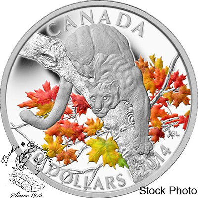 Canada 2014 $20 Cougar Perched on a Maple Tree Coloured Silver Coin Orig $99.95
