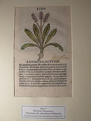 1491 Original Handcolored Herbal Leaf 'herbarius Moguntinus' Botanical Incunable