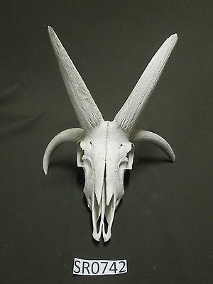 Small 4 horn western decor hill country outdoors rustic SR0742