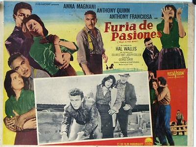 L596 Wild is the Wind, Mexican Lobby card Anthony Quinn