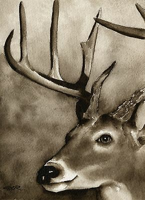 WHITE TAILED BUCK note cards by watercolor artist DJ Rogers