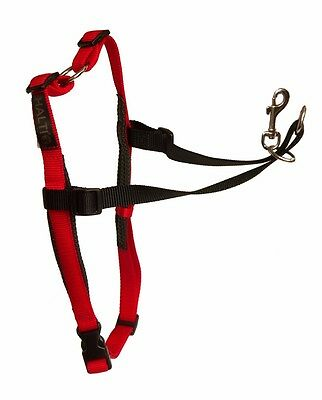 HALTI Harness - Harnais Pour Chien Formation -Taille M - The Company Of Animals