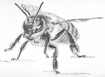 GUARD BEE LITHOGRAPH-Honeybee/Bees L@@K!