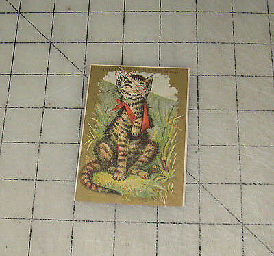 """Vintage TABBY CAT """"Did You See Me Get The Best Of Him?"""" Comical 2.5"""" x 4"""" Card"""