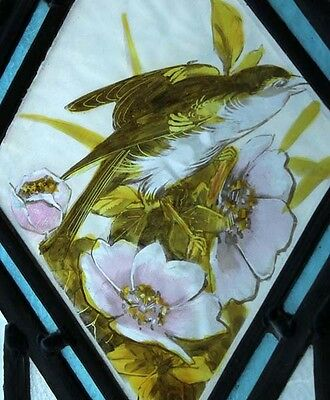 Victorian Painted Bird In Blossom Antique English Stained Glass Window