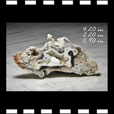 Agate After Coral Fossil Fossilized Tampa Bay Florida